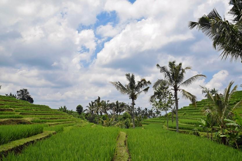 Geschäftsreise: Dezentrale Energieversorgung mit Fokus auf Hybridsystemen mit Kleinwind und PV in Indonesien